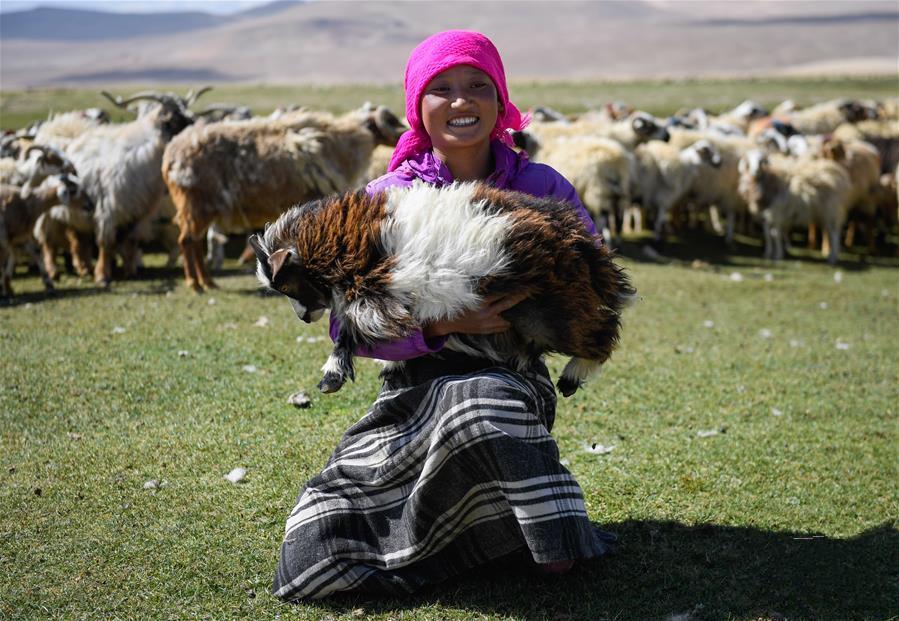 Xigazer Hirten scheren Schafe