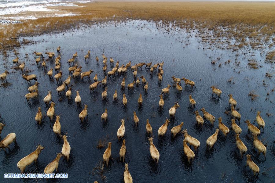 In Bildern: Feuchtgebietsschutz in China