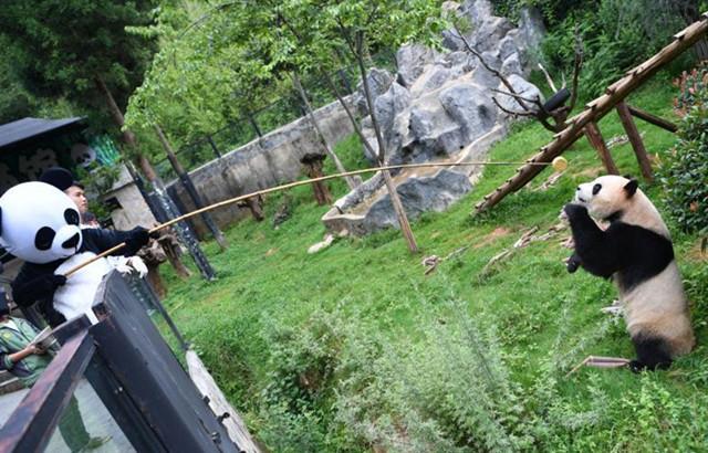 Wildtierpark richtet Spezialküche für Pandas ein