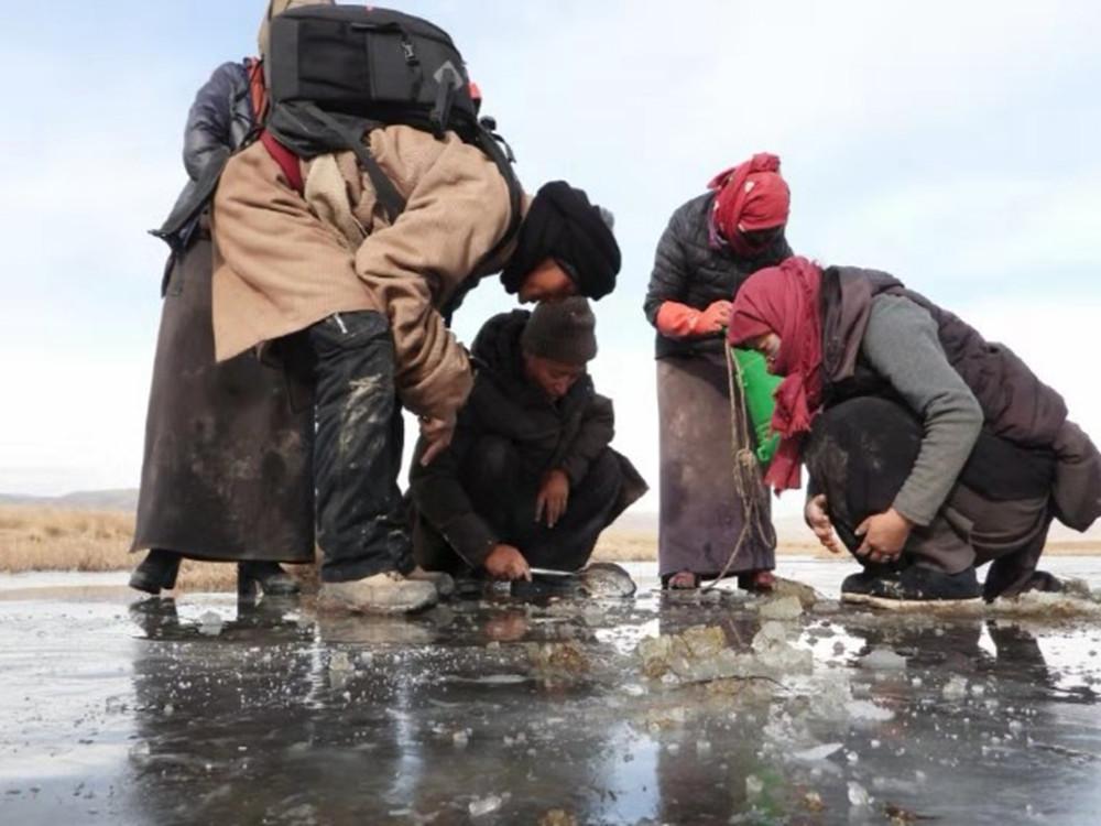 若尔盖牧民解救千条黄河土著鱼