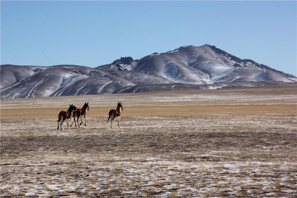 雪后的藏北羌塘草原静谧而灵动