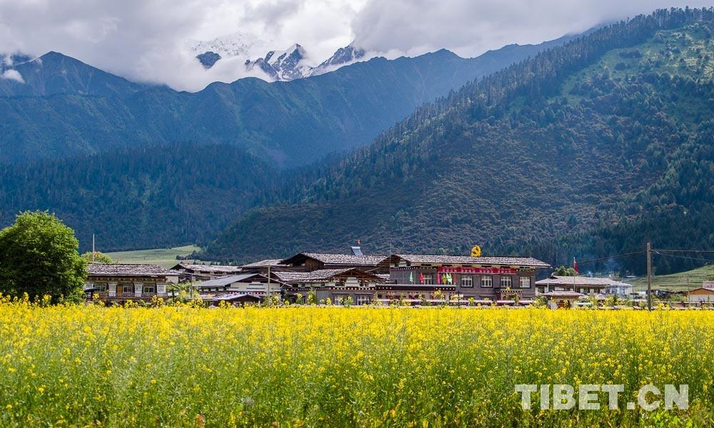环行藏东南 | 田园鲁朗花开正香