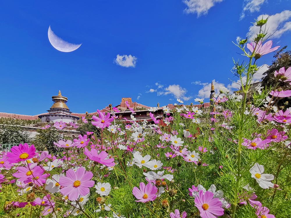 【和美新西藏】花映白居寺