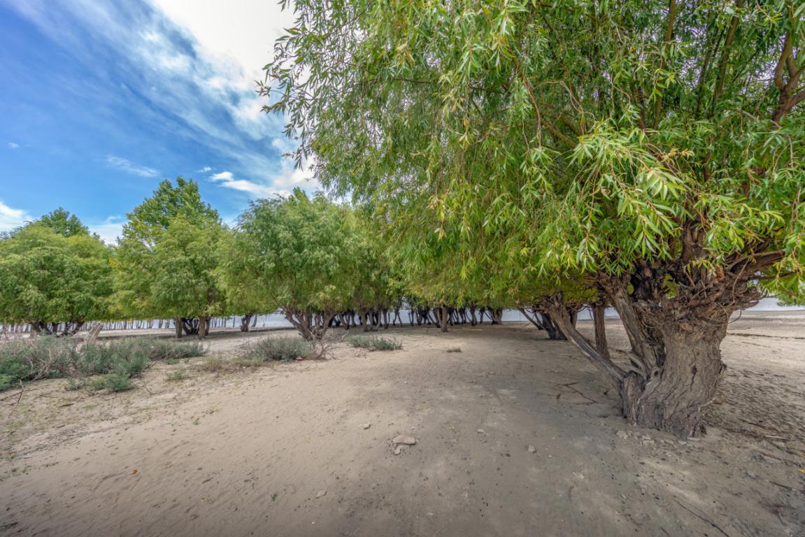 【和美新西藏】但见绿洲覆沙滩