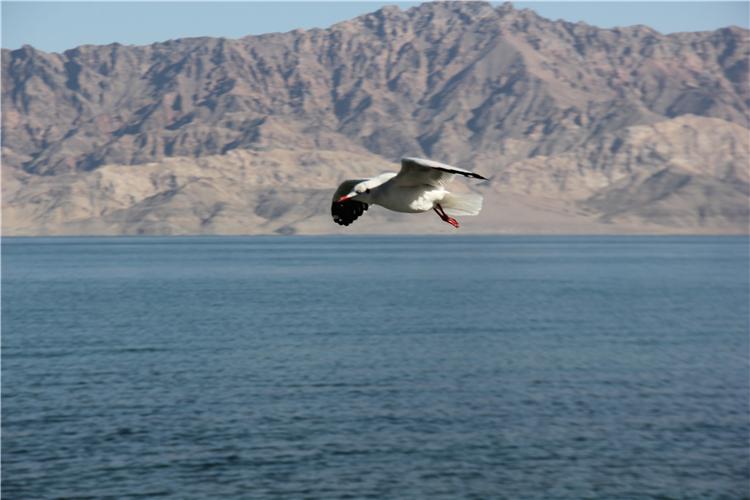 西藏阿里班公湖:鸟儿的天堂