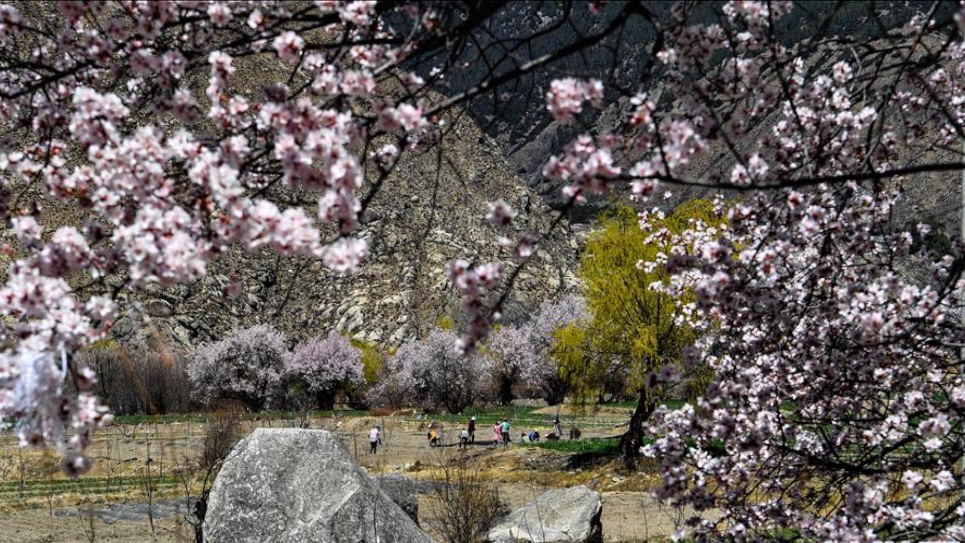 春暖花开  各行各业助力西藏复工