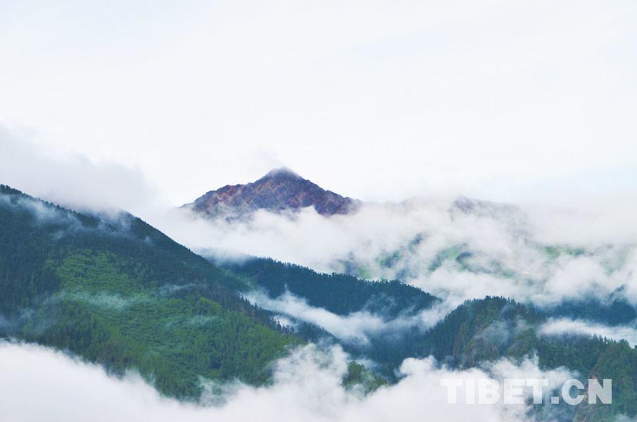 晨雾朦胧中的如画林芝