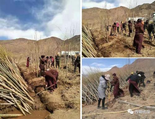 拉萨市林周县毕龙寺管委会组织僧尼开展植树造林活动