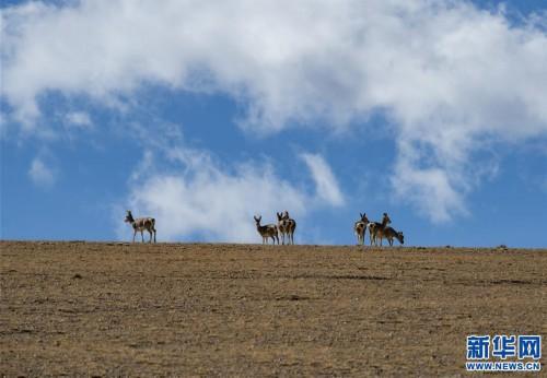 (美麗中國)(3)西藏日喀則:美麗的佩枯錯