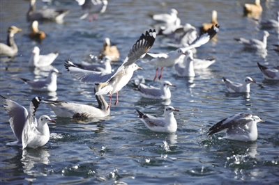 宗角禄康公园:城市里的候鸟天堂