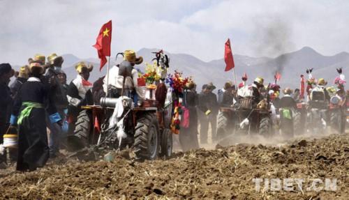 西藏各地春耕春播忙