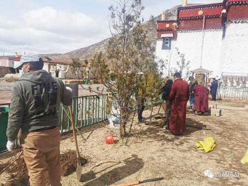 桑日縣統戰部以植樹造林活動為載體 繼續推進園林式寺管會和寺廟建設工作