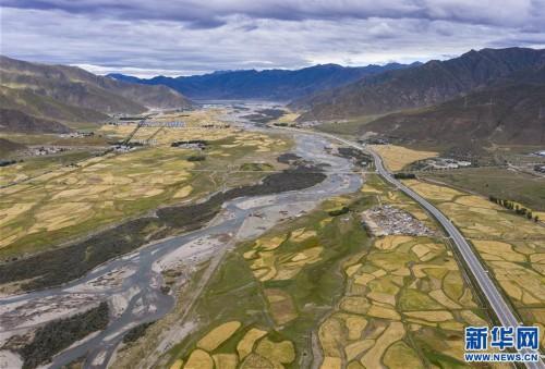 拉萨河谷:大地流金迎丰收