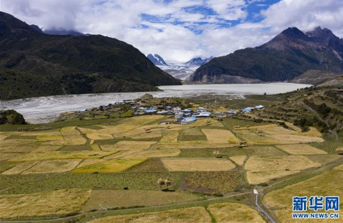 西藏:冰川脚下的秋收