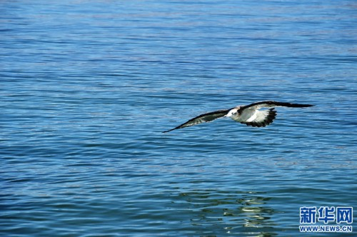 鸟翔班公湖