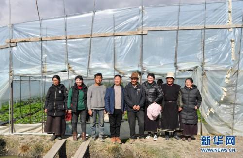 """西藏林芝:盛开在蔬菜大棚里的""""民族团结之花"""""""