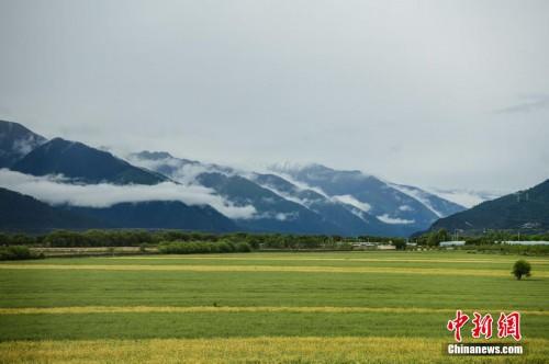 西藏林芝夏季风景美如画