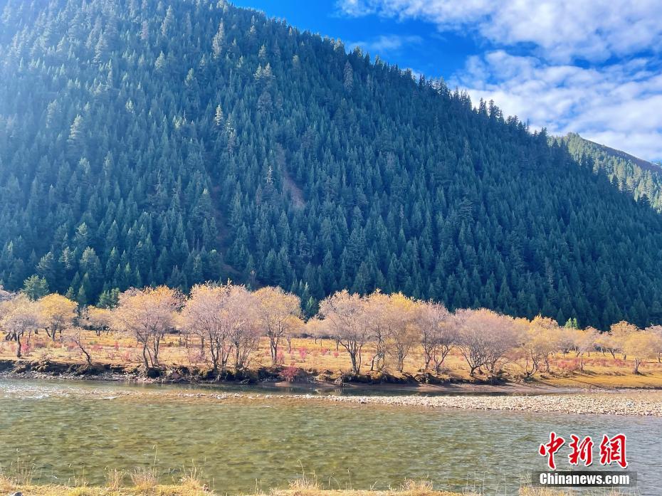 """西藏""""小瑞士""""类乌齐:醉美风光演绎秋日童话"""